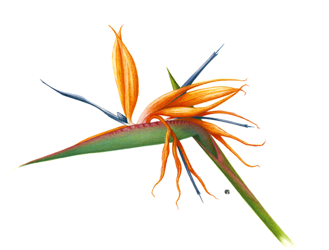 Tropical Botanic Art Greeting Cards - Goldsmith Galleries